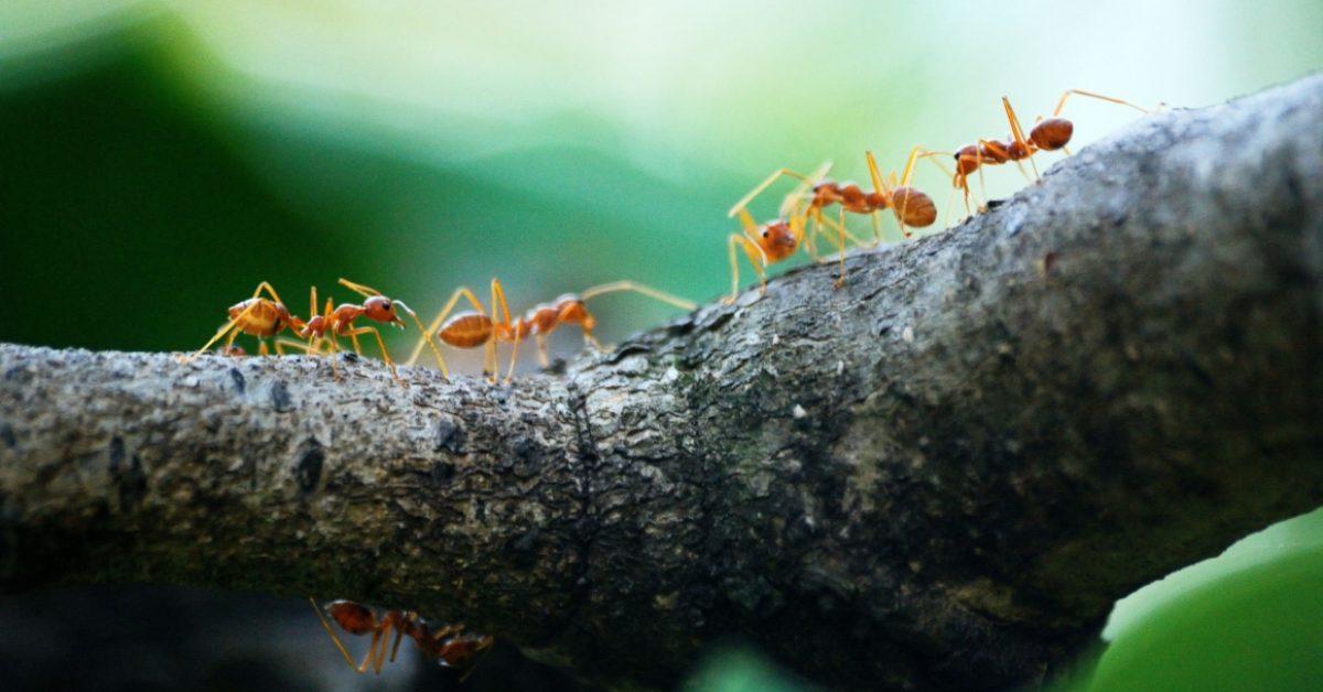 ¿Qué son los gastos hormiga y cómo te afectan a fin de mes_